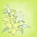 Background with green flower lily spring theme invitation or greeting card vector illustration Royalty Free Stock Photo