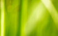 Background green grass blur gradient Stock Photos