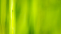 Background green grass blur lines gradient with yellow Stock Image