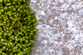 Background of green moss and stone Royalty Free Stock Image