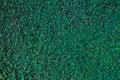 Background Green Texture, Natu...