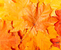 Background group autumn orange leaves outdoor Stock Photography