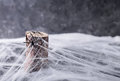 Background for Halloween. Spider`s web and spiders Royalty Free Stock Photo