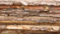 Background of horizontally lying raw rough wooden planks with bark closeup Stock Photography