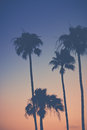 Purple Orange Sunset Sky with Palm Trees Royalty Free Stock Photo