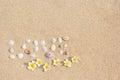 Background inscription love seashells on the sand with flowers plumeria frangipani.