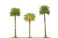 Background isolated palm tree white Стоковые Изображения RF