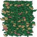 Background leaf clover