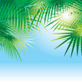 Background with leaves of palm trees Royalty Free Stock Image