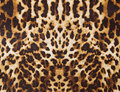 Background with leopard texture abstract Royalty Free Stock Image
