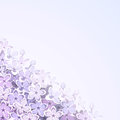 Background with lilac flowers. Vector eps-10.
