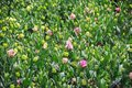 Background with lisianthus flower or auspicious flowers farm part 2 Royalty Free Stock Photo