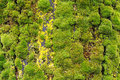 Background of lush green moss growing in dense clusters in a moist environment Stock Images
