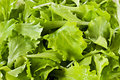 Background made of leaves of fresh green salad natural natural source vitamin a vitamin c beta carotene and calcium Stock Images
