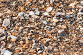 A background made of seashells. Royalty Free Stock Photography