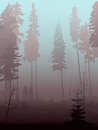 Background of mist in coniferous forest. Stock Images