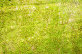 Background of moss spring green leaf backgrounds Stock Photo