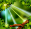 Background of the mystical mysterious forest Stock Images