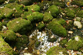 Background nature green moss on the boulders, autumn leaves, and a puddle of water Royalty Free Stock Photo