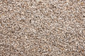 Background out of peeled sunflower seeds can be used as a texture Royalty Free Stock Images