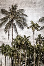 Background of palm tree with texture sack transparent Royalty Free Stock Photo