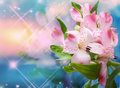 Background with pink flowers beautiful Royalty Free Stock Photos