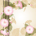 Background with pink Morning glory Stock Photos