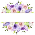 Background with pink, purple and white roses and lilac flowers. Vector eps-10. Royalty Free Stock Photo