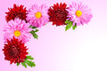 Background for the postcard of chrysanthemums. Stock Images