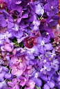 Background of purple orchid Royalty Free Stock Photo