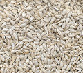 Background raw sunflower seeds Stock Images
