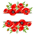 Background with red poppies. Vector illustration.