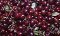 Background of red ripe cherry berries Royalty Free Stock Photo