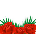 Background of red rose petals. Stock Images