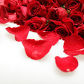 Background with red roses flowers Stock Images