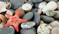 Background with a red starfish Royalty Free Stock Image