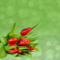 Background with red tulips Royalty Free Stock Image