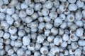 Background of a ripe blueberries Stock Photography
