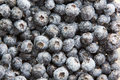 Background of ripe blueberries overhead texture indigo coloured washed fresh on display at a farmers market or during preparation Stock Photo