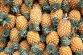 The background of ripe pineapples Royalty Free Stock Photo