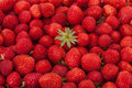 Background of ripe strawberries. Royalty Free Stock Photo