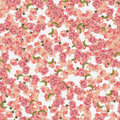 Background Roses Allover Royalty Free Stock Image