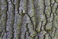Background rough bark Royalty Free Stock Photos