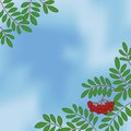 Background with rowanberry on sky branches and berries blue Stock Image