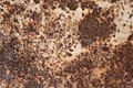 Background of rusty surface Stock Images