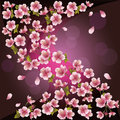 Background with sakura - Japanese cherry tree Royalty Free Stock Photo
