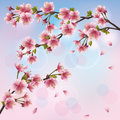 Background with sakura-Japanese cherry tree Royalty Free Stock Photo