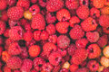 Background of a scattering of red and yellow raspberries Royalty Free Stock Photo