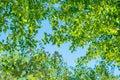 Background, screensaver of deciduous trees. Bright sunlight illuminating the trees.