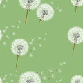 Background seamless pattern with dandelion Royalty Free Stock Photo